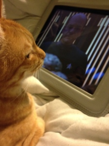 My orange tabby Bela watching ST:TNG on my ancient iPad